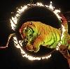 Цирки в Климовске