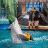 Дельфинарии, океанариумы в Климовске
